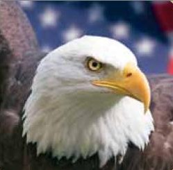 Wiki_Eagle_Public_Domain - Copy - Copy