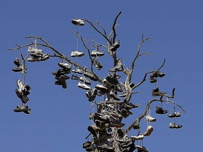 Shoe_tree_at_Morley_field - Copy
