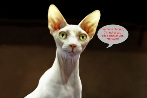 Sphynx_-_ChickenCat_-_edit - Copy