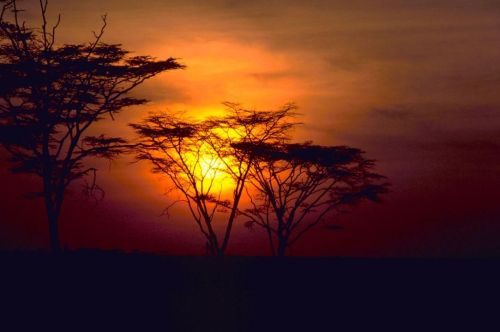 African_sunset - Copy