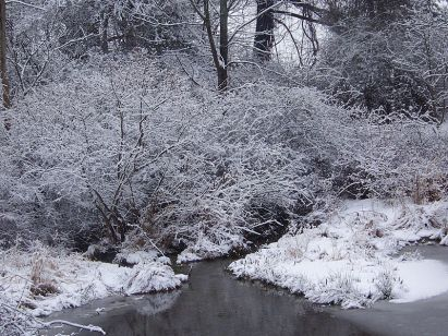 Pond_in_winter - Copy